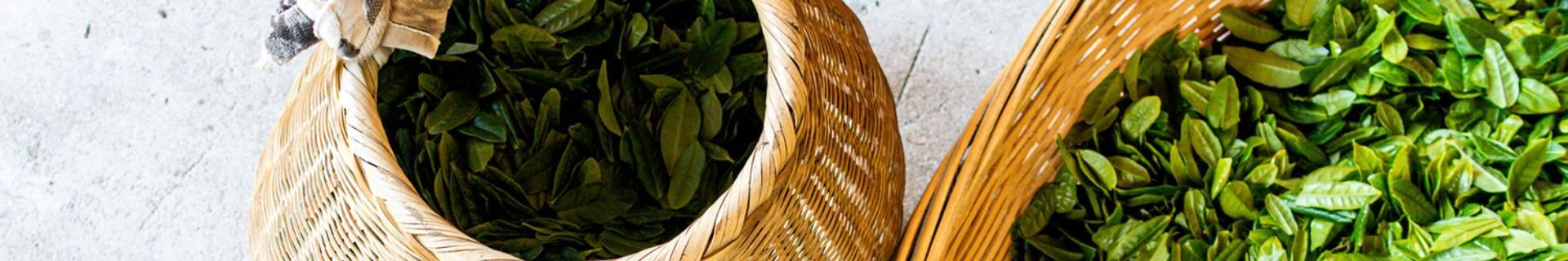 Organic Oolong Tea - ECOLECTIA