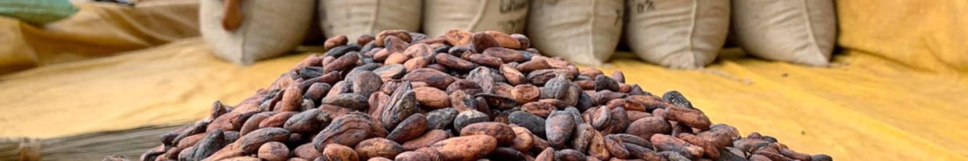 Selección de Cacaos sostenibles de comercio justo - ECOLECTIA