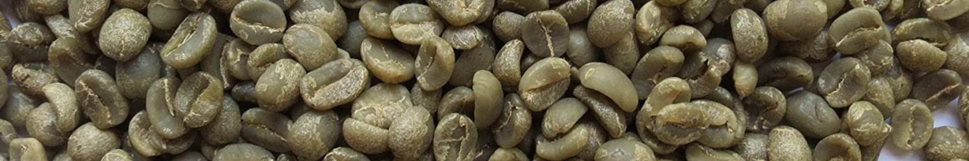 Café verde orgánico - ECOLECTIA